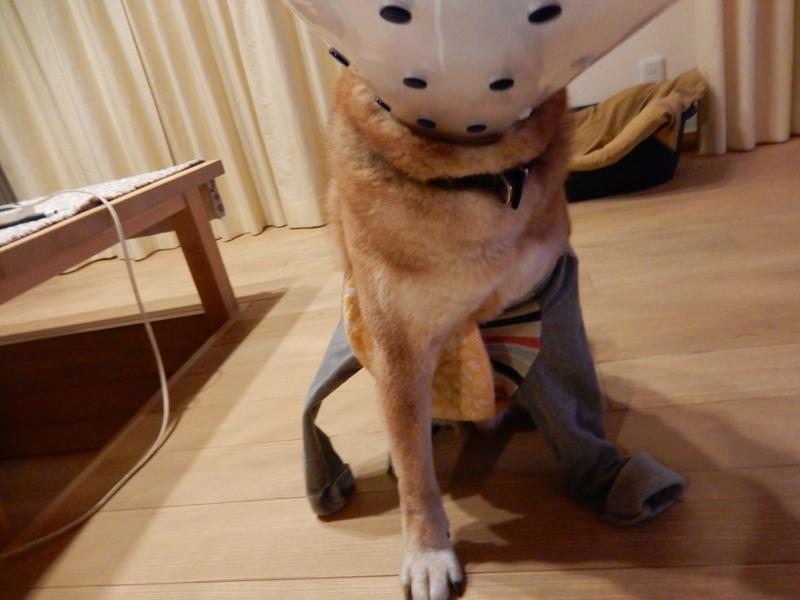 f:id:miyuki1967:20160219094224j:image:w450