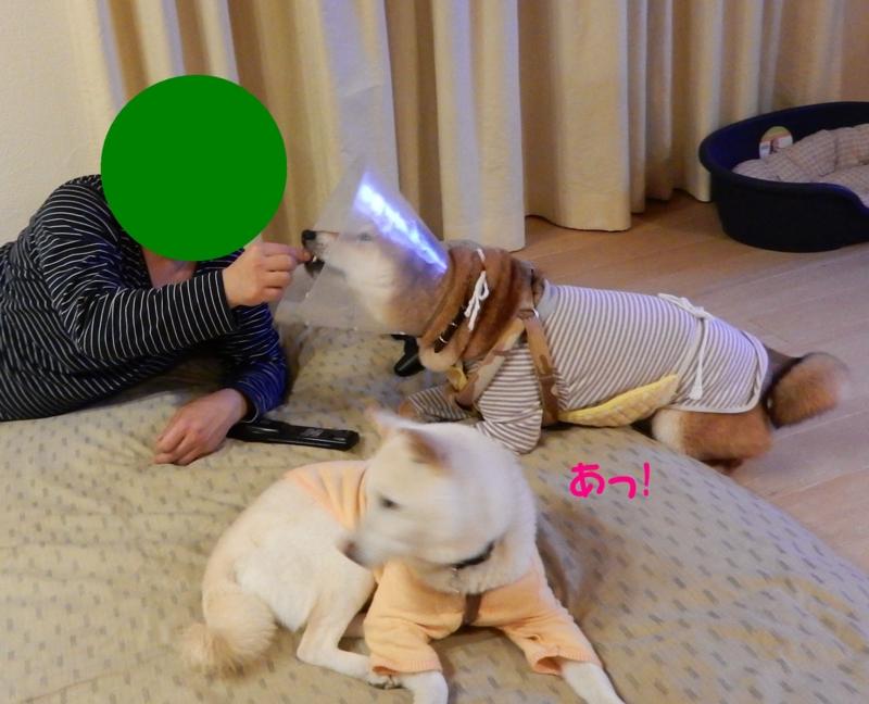 f:id:miyuki1967:20160317094012j:image:w450