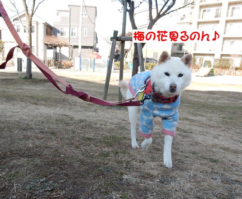 f:id:miyuki1967:20170124104909j:image:w450