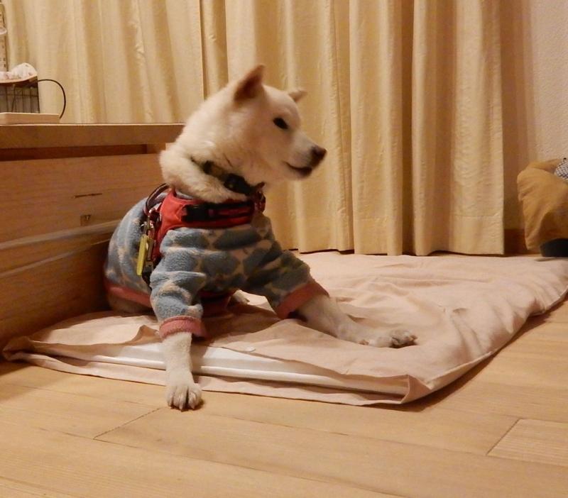 f:id:miyuki1967:20170124110638j:image:w450