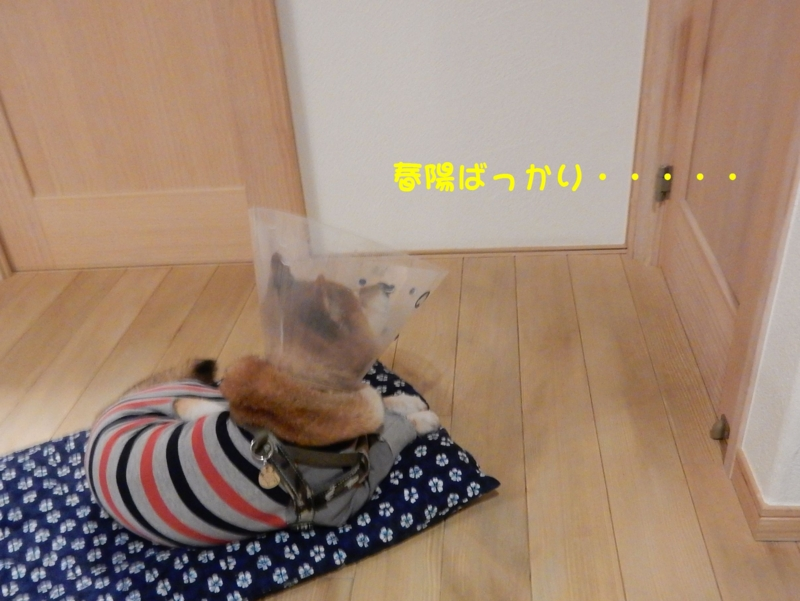 f:id:miyuki1967:20170214094711j:image:w450