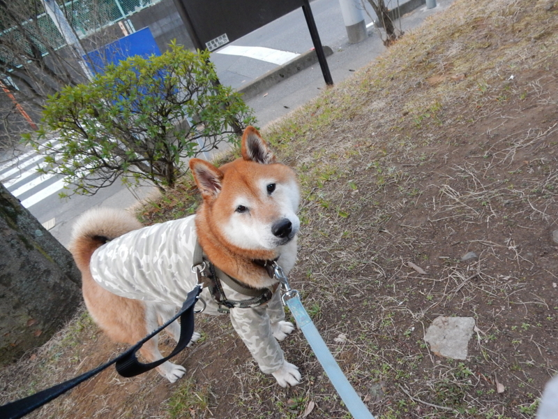 f:id:miyuki1967:20170225112315j:image:w450