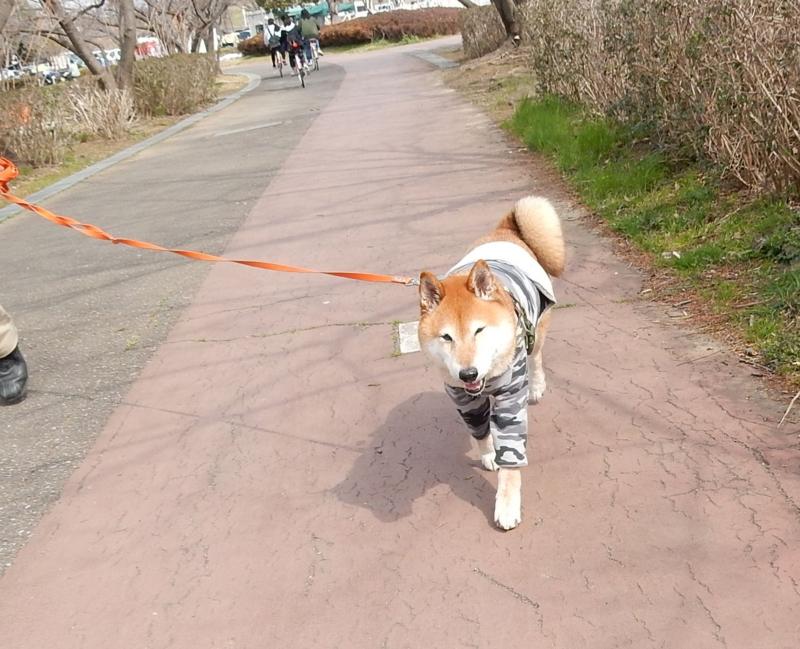 f:id:miyuki1967:20170308112528j:image:w450