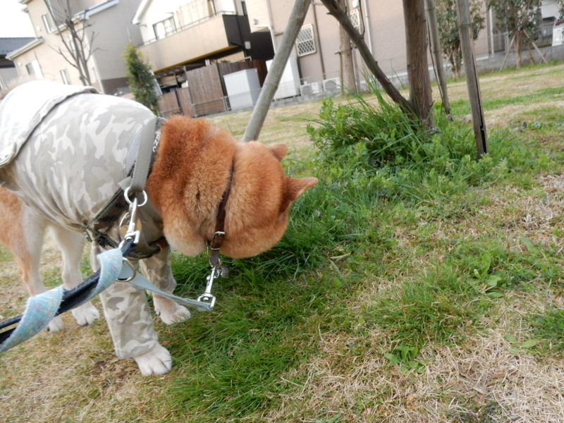 f:id:miyuki1967:20170325163437j:image:w450