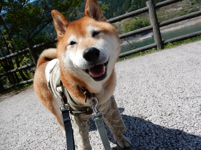 f:id:miyuki1967:20170515104148j:image:w450