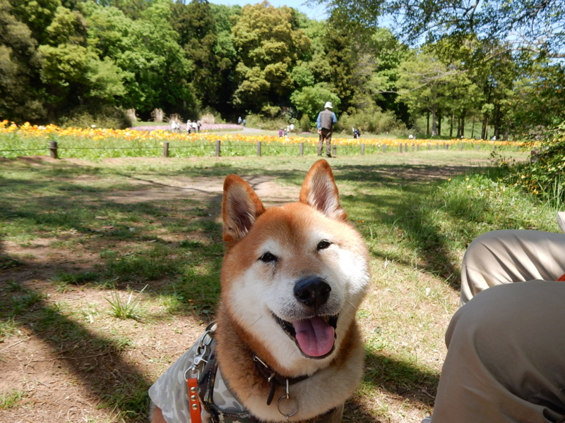 f:id:miyuki1967:20170516113656j:image:w450