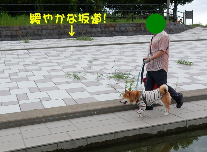 f:id:miyuki1967:20170829091602j:image:w450