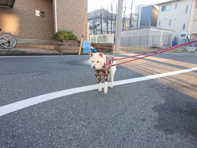 f:id:miyuki1967:20171101100842j:image:w450