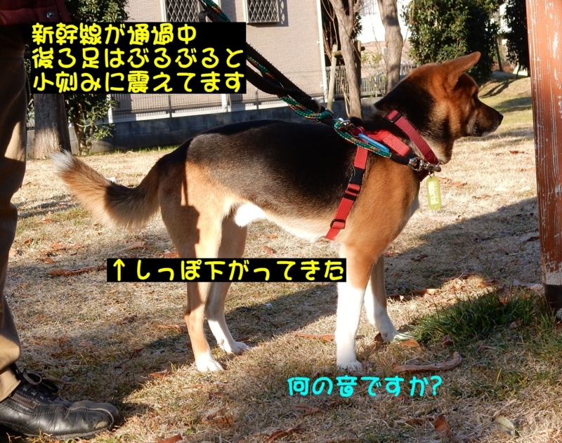 f:id:miyuki1967:20180111100035j:image:w450