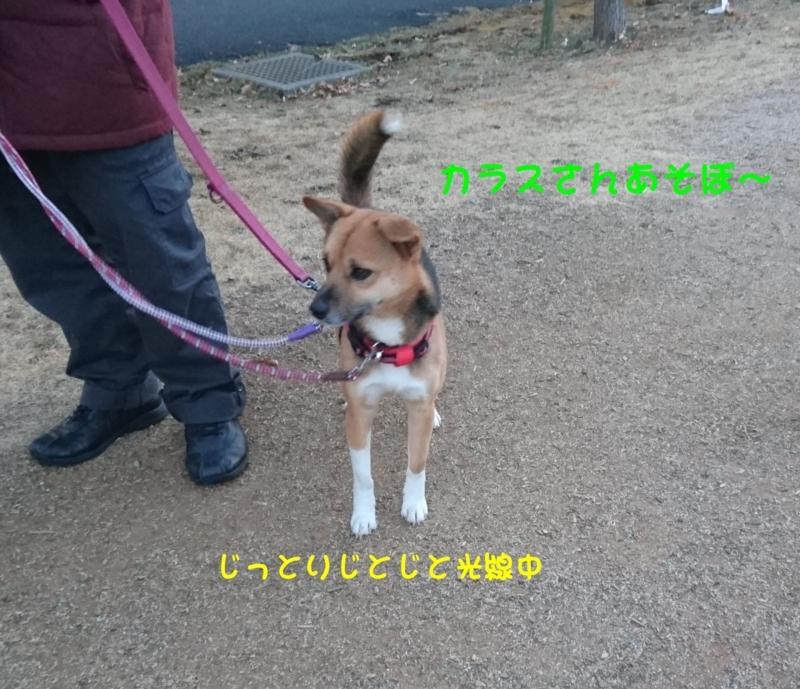 f:id:miyuki1967:20180131115255j:image:w450