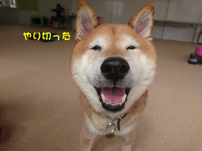 f:id:miyuki1967:20180312114241j:image:w450