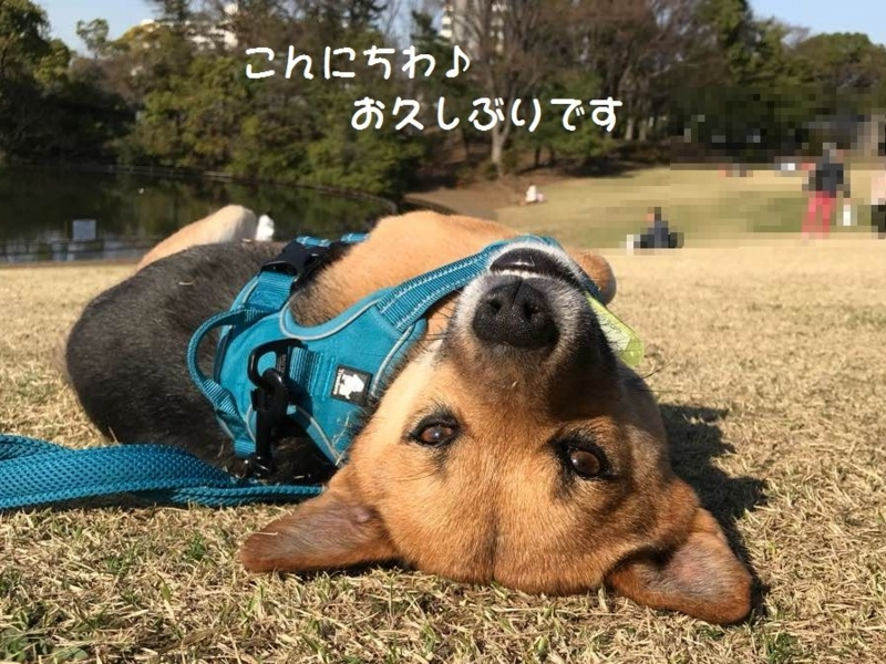 f:id:miyuki1967:20180406155225j:image:w450