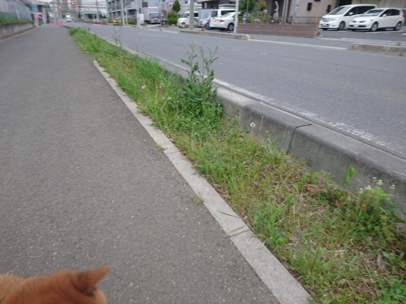 f:id:miyuki1967:20180411105434j:image:w450