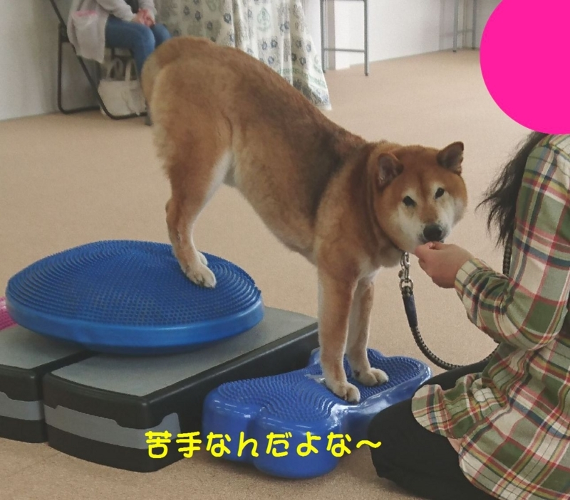 f:id:miyuki1967:20180416111314j:image:w450
