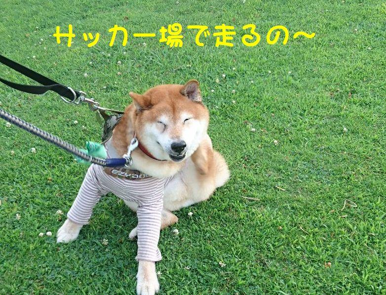 f:id:miyuki1967:20180725112318j:image:w450