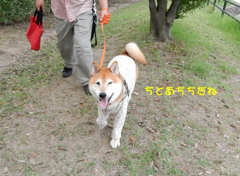 f:id:miyuki1967:20180807095247j:image:w450