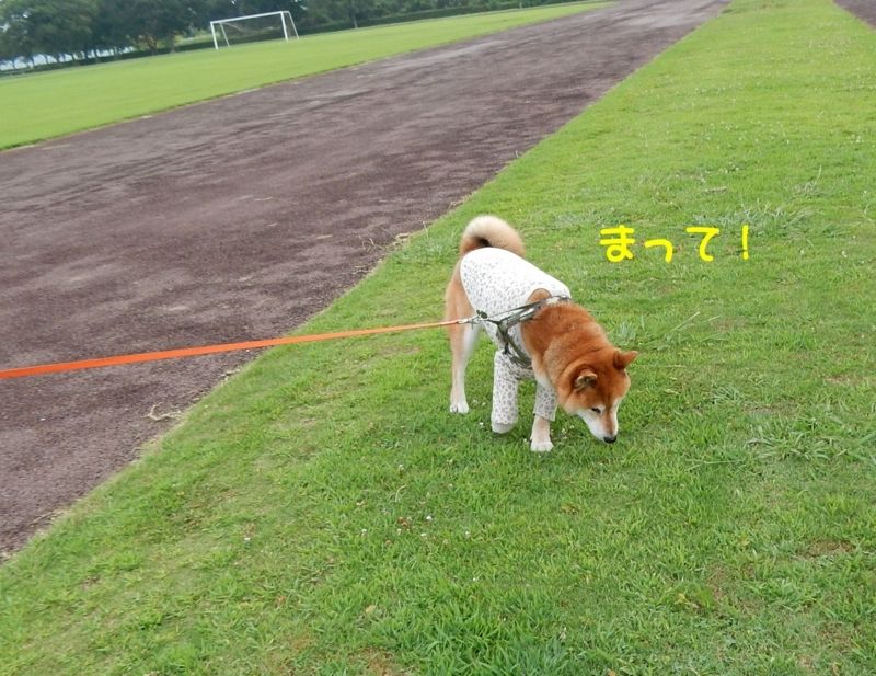 f:id:miyuki1967:20180807095308j:image:w450