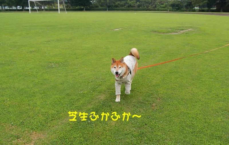 f:id:miyuki1967:20180807095313j:image:w450