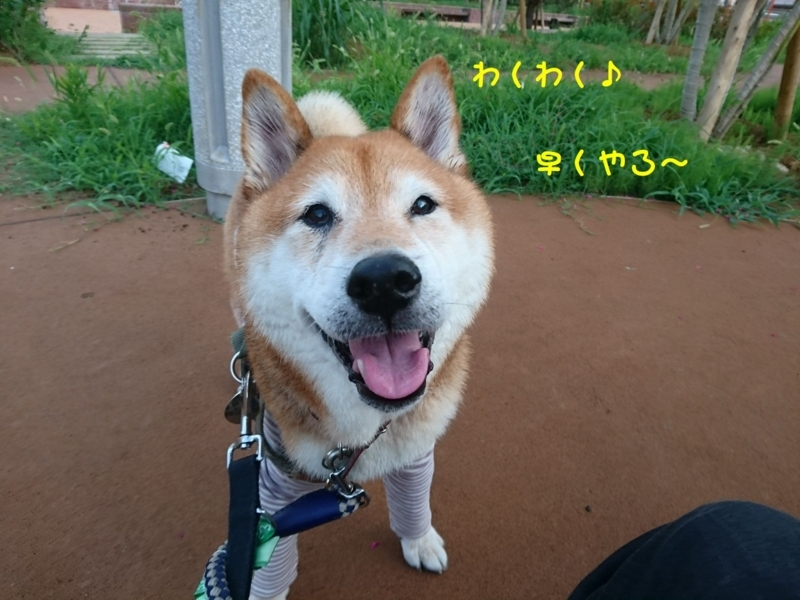 f:id:miyuki1967:20180808105808j:image:w450