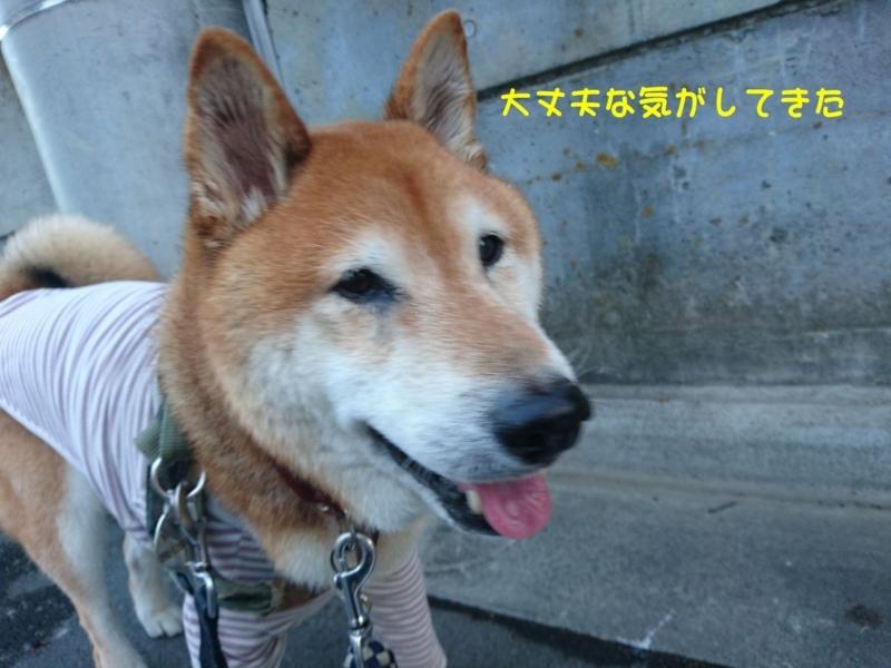 f:id:miyuki1967:20180808105825j:image:w450