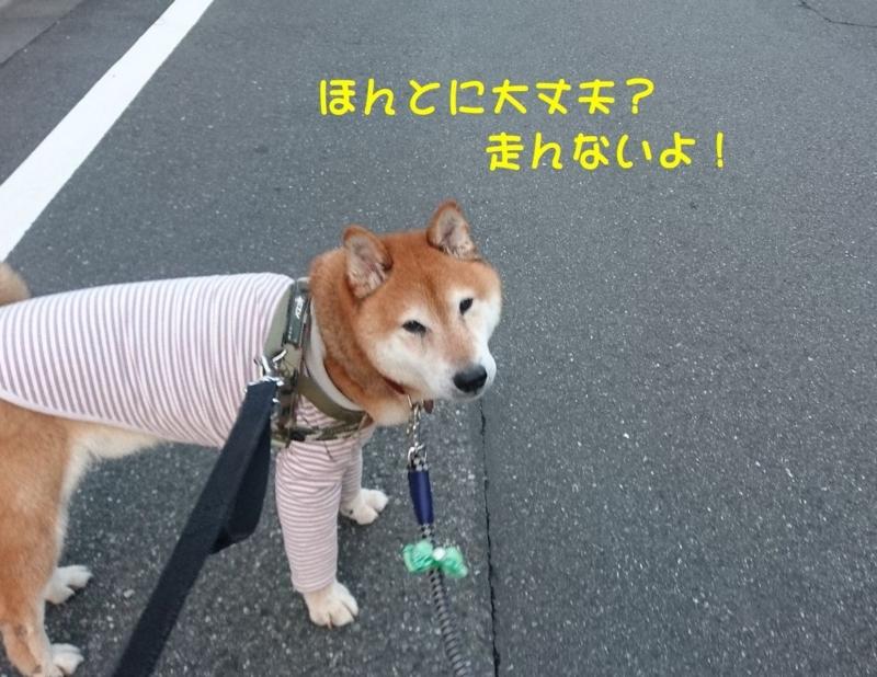 f:id:miyuki1967:20180808105829j:image:w450