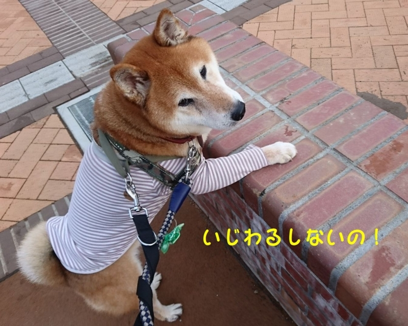 f:id:miyuki1967:20180808112455j:image:w450