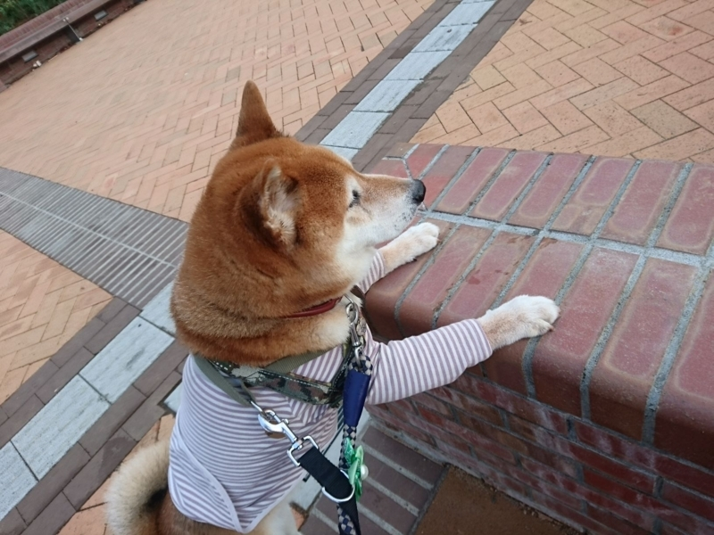f:id:miyuki1967:20180808112510j:image:w450