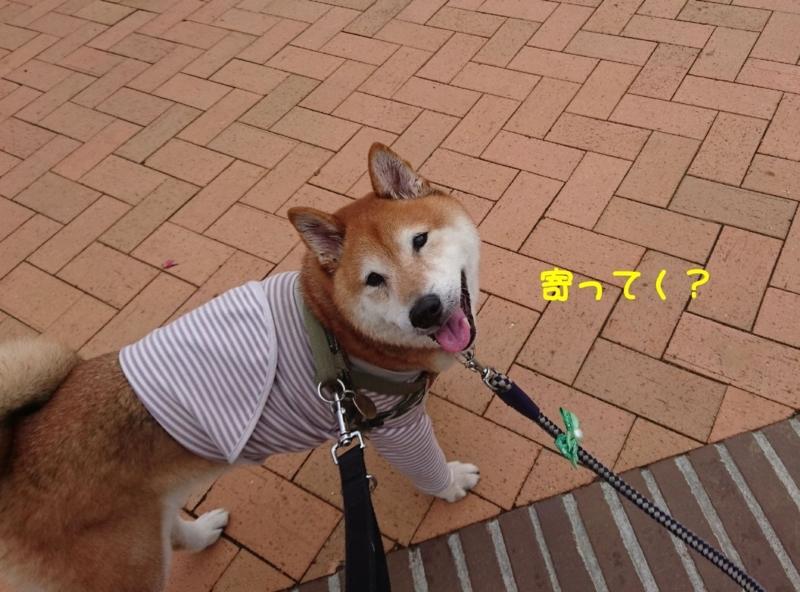 f:id:miyuki1967:20180809113706j:image:w450