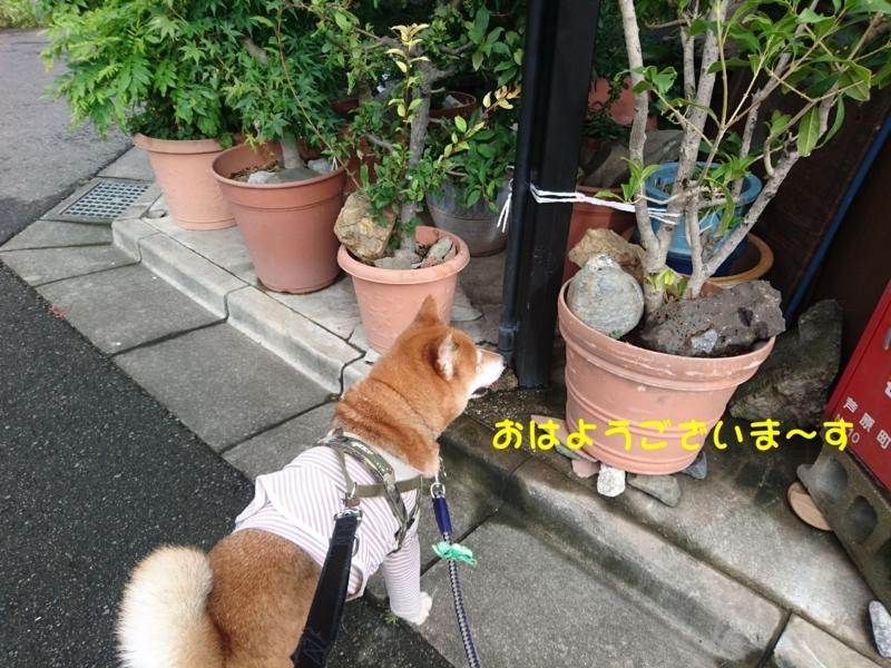 f:id:miyuki1967:20180809114257j:image:w450
