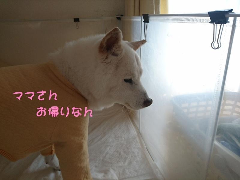 f:id:miyuki1967:20180905110241j:image:w450