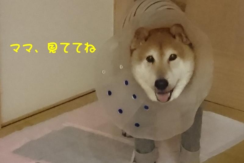 f:id:miyuki1967:20180906094203j:image:w450