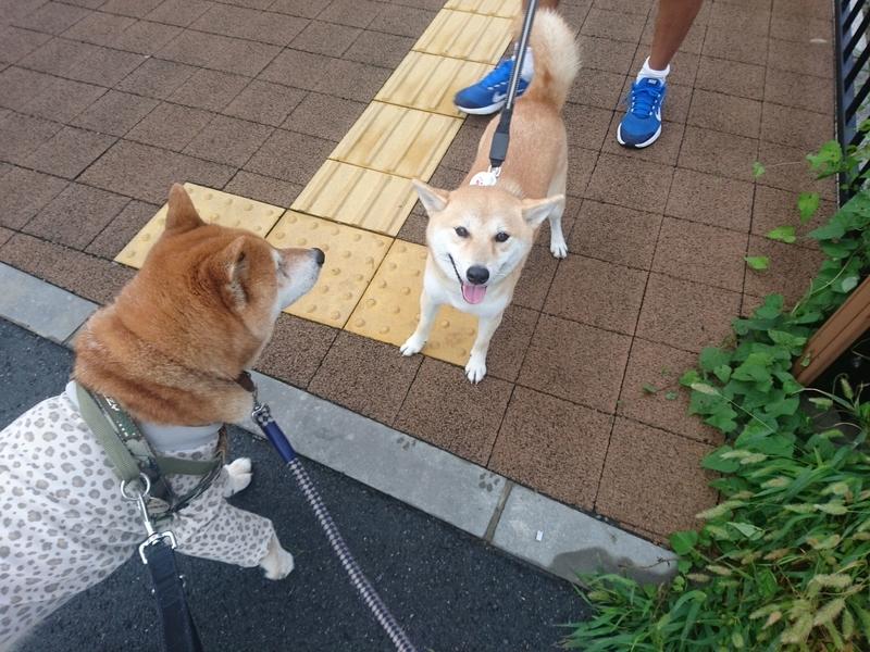 f:id:miyuki1967:20180907102347j:image:w450