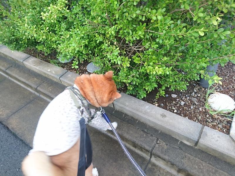 f:id:miyuki1967:20180907102422j:image:w450