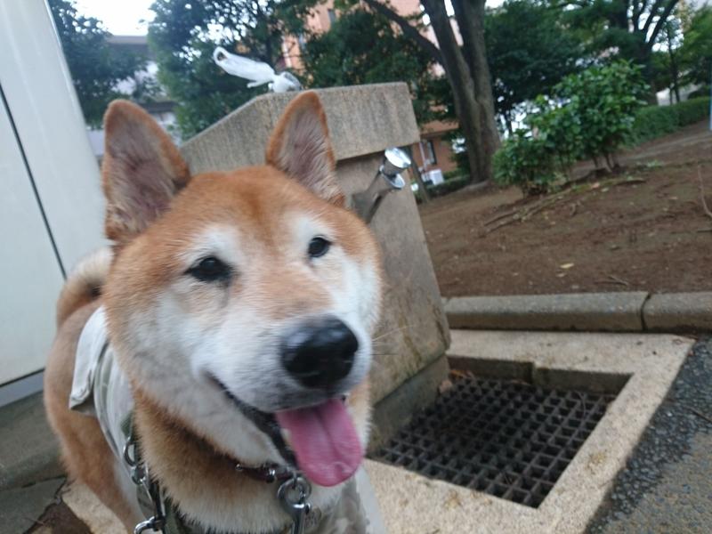 f:id:miyuki1967:20180912101321j:image:w450