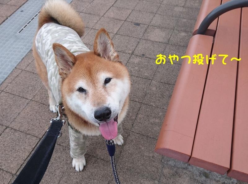 f:id:miyuki1967:20180912101719j:image:w450
