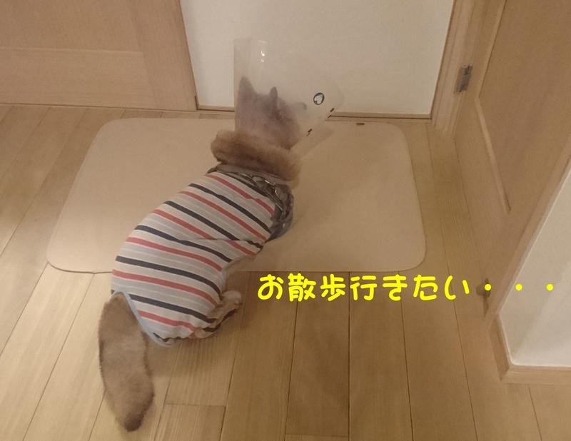 f:id:miyuki1967:20180921114956j:image:w450