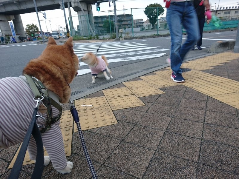 f:id:miyuki1967:20181003120225j:image:w450