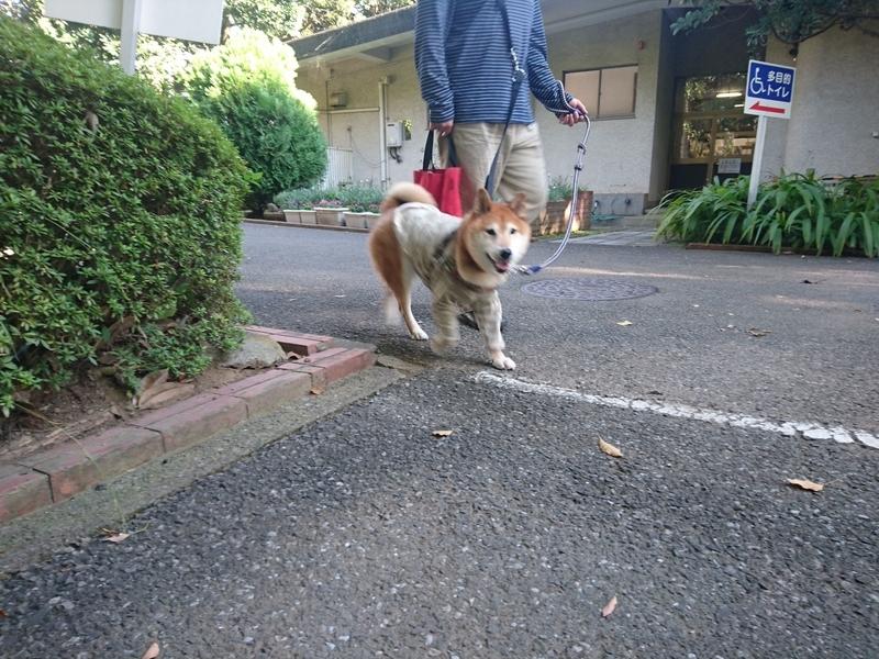 f:id:miyuki1967:20181022120421j:image:w450