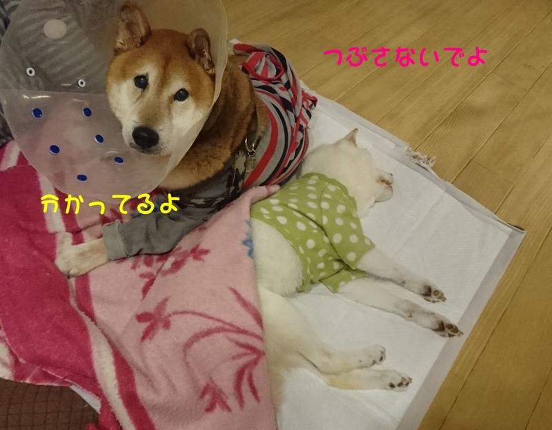 f:id:miyuki1967:20181024105345j:image:w450