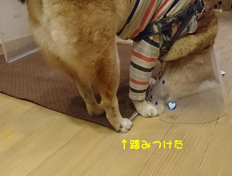 f:id:miyuki1967:20181025113857j:image:w450
