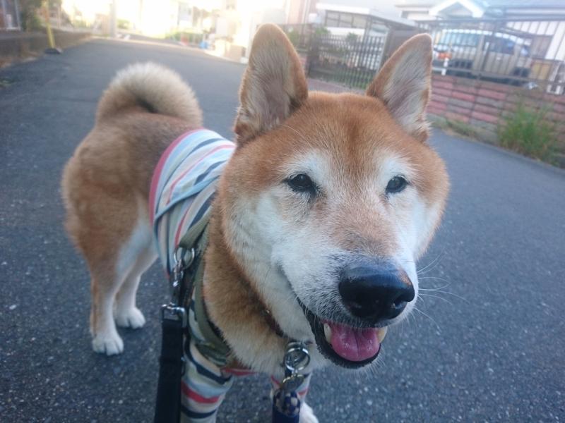 f:id:miyuki1967:20181102121841j:image:w450