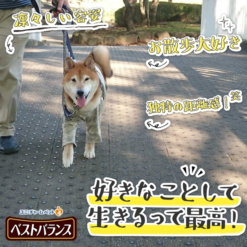f:id:miyuki1967:20181115101014j:image:w450