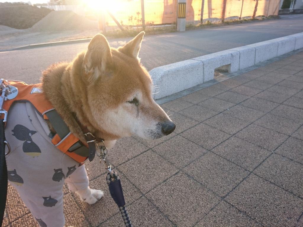 f:id:miyuki1967:20190219111208j:plain:w450