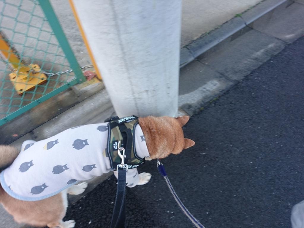 f:id:miyuki1967:20190220115043j:plain:w450