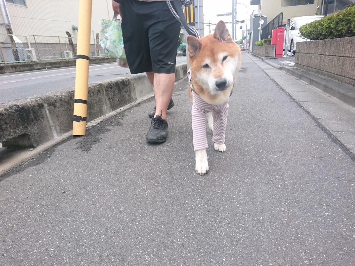 f:id:miyuki1967:20190625113505j:plain:w450