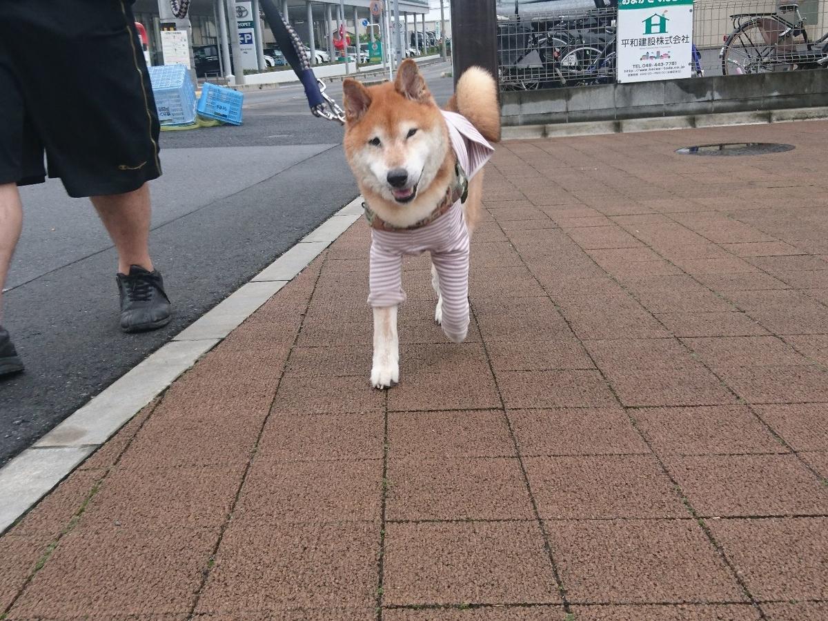 f:id:miyuki1967:20190628110607j:plain:w450