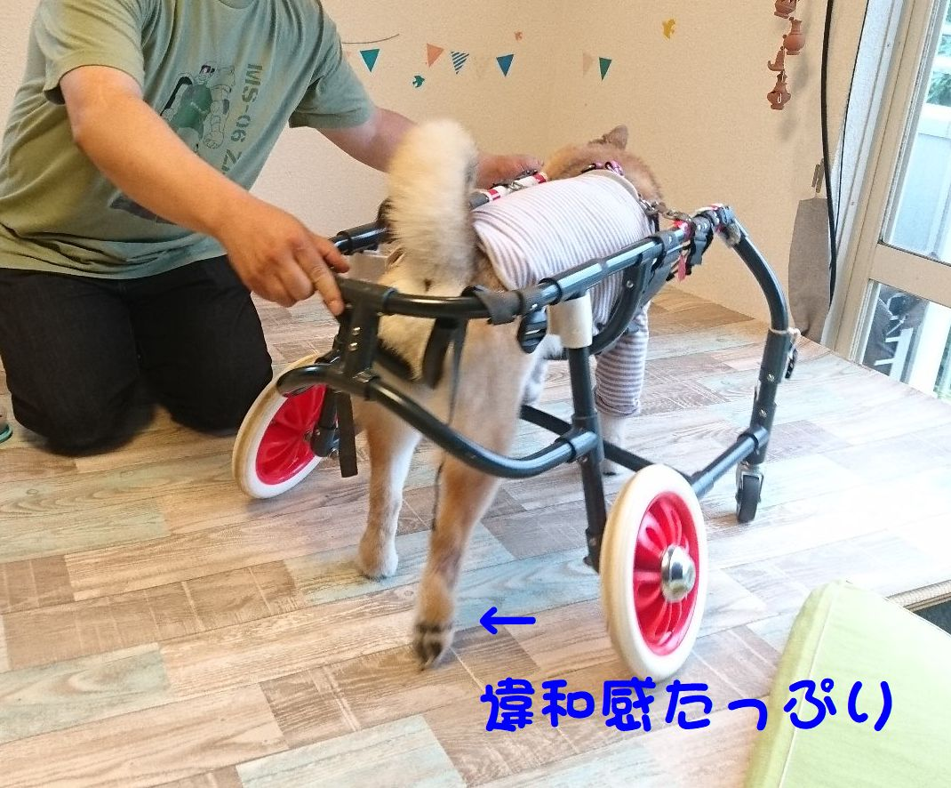 f:id:miyuki1967:20190701103100j:plain:w450