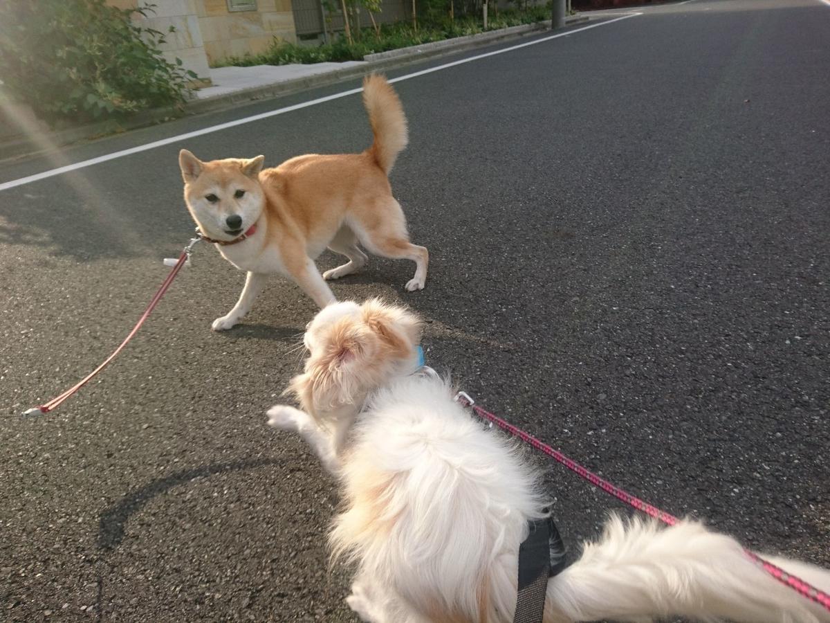 f:id:miyuki1967:20190920112042j:plain:w450