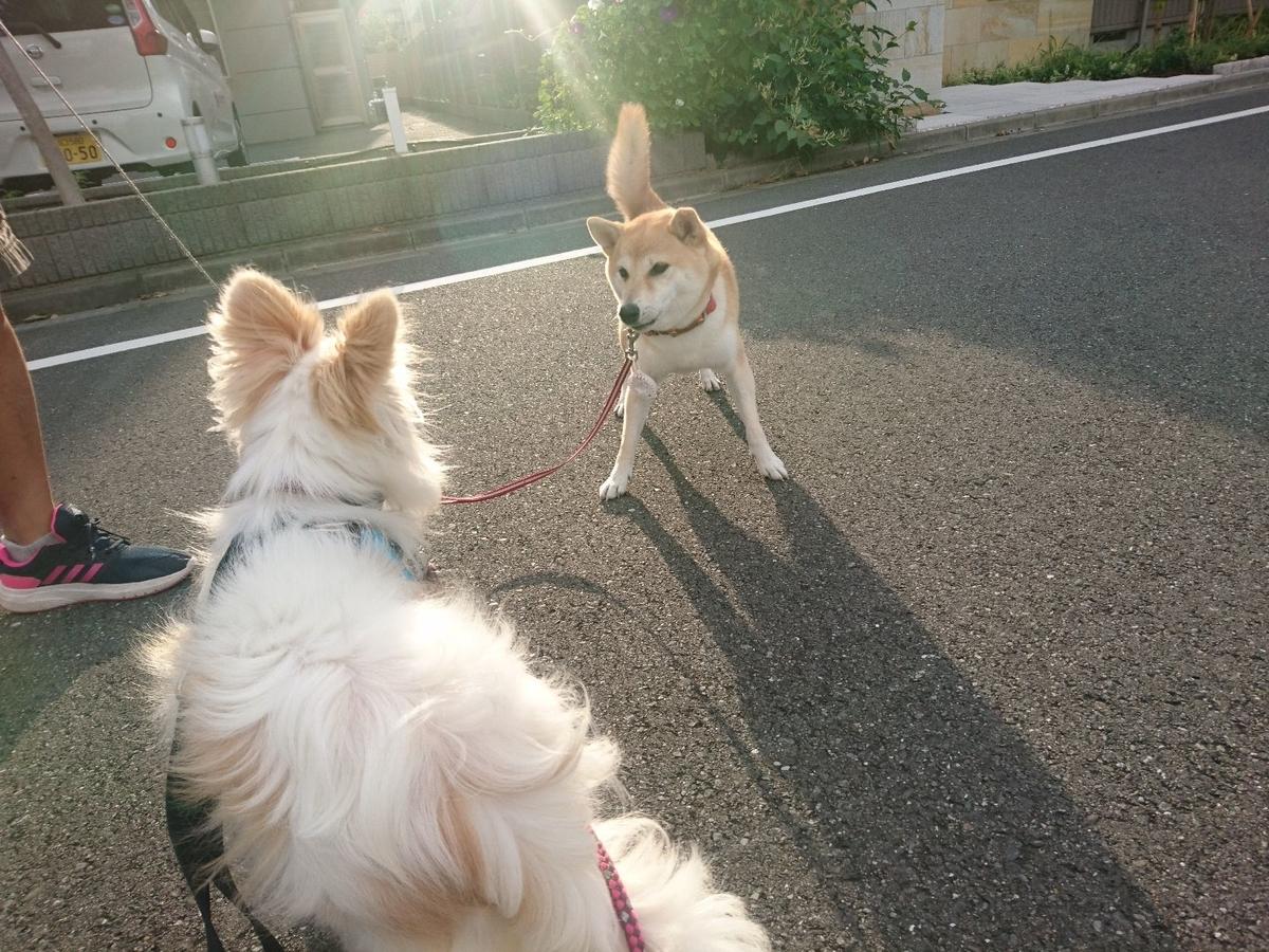 f:id:miyuki1967:20190920112210j:plain:w450