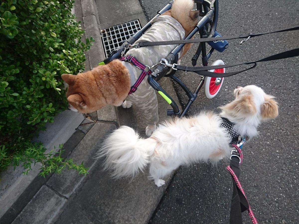 f:id:miyuki1967:20190920112854j:plain:w450